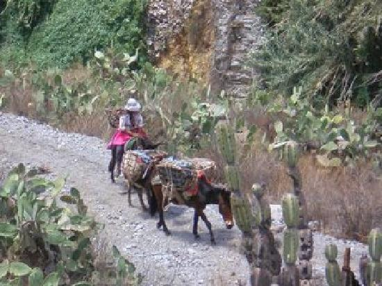 Arequipa Region, เปรู: Day 2- a local ewoman traveling through the canyon