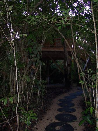 Hamanasi Adventure and Dive Resort: Path to Treehouse