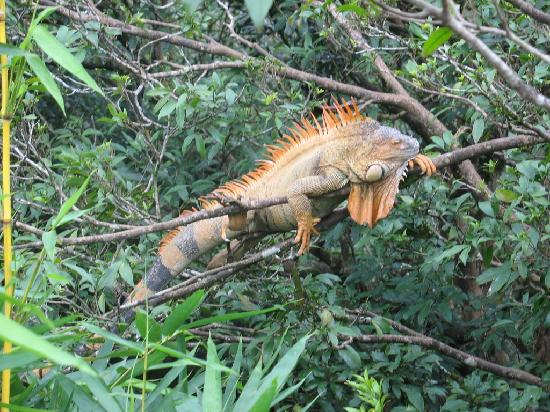 Foto di Costa Rica