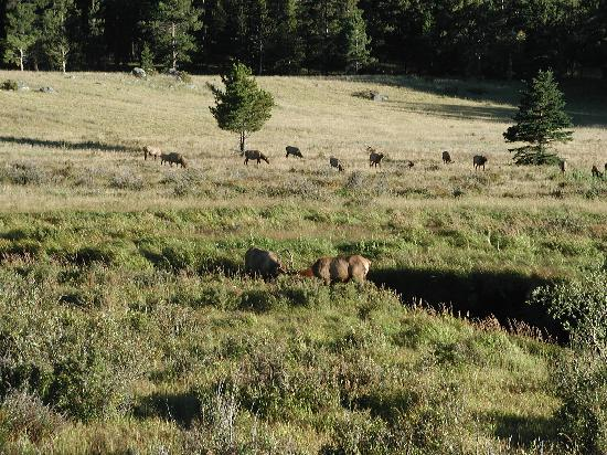 Niwot Inn & Spa: Estes Park Elk Meadow