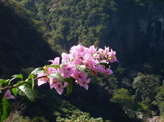 Casa Bella Rita Boutique Bed & Breakfast : Flora. overlooking canyon @ Casa Bella Rita