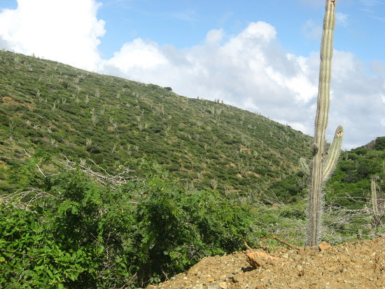 Oranjestad, Aruba: the hillside on the jeep tour..