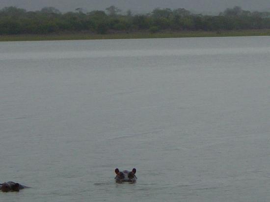 Akagera National Park : Hippo