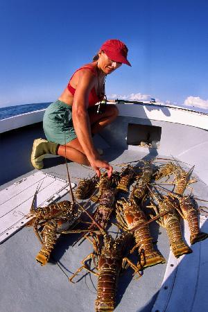 Rickmon Bonefish Lodge: Rickmon Lodge lobster