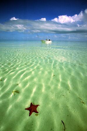 Rickmon Bonefish Lodge : Rickmon Lodge bonefish flat