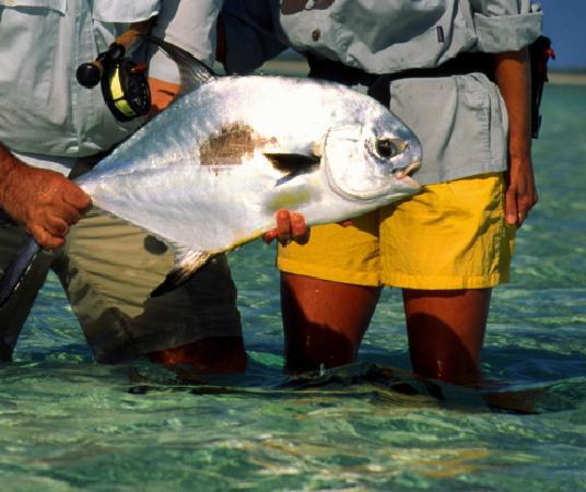 Rickmon Bonefish Lodge: Permit from sandy Point - Rickmon Lodge