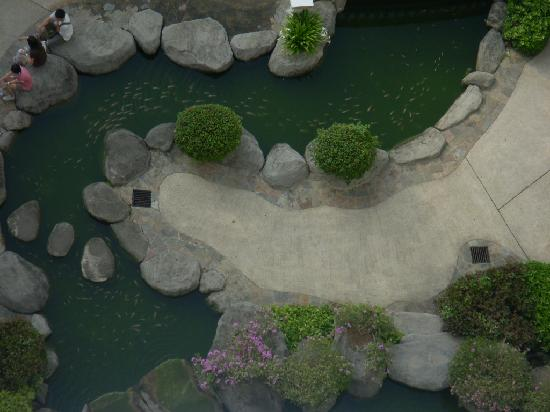 Everly Resort : Koi-filled pond