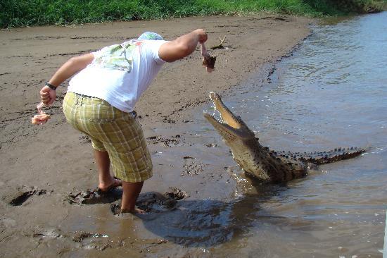 Reserva Biologica Carara: Feeding a croc!
