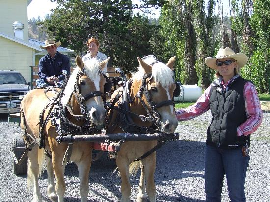 Long Hollow Guest Ranch: The ranch tour wagon being pulled by