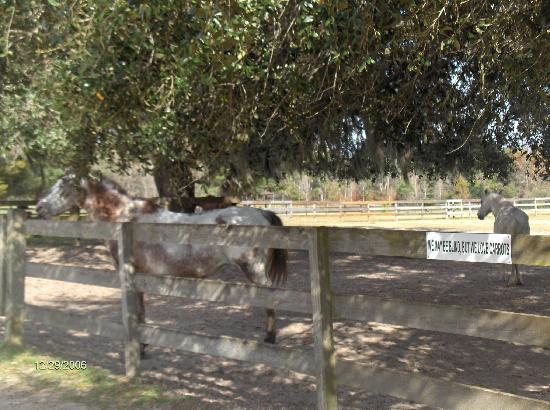 Paynes Prairie State Preserve: Mill Creek Farm's blind horse paddock