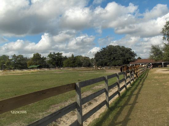 Paynes Prairie State Preserve: Mill Creek Farm's fenced meadow for retired horses
