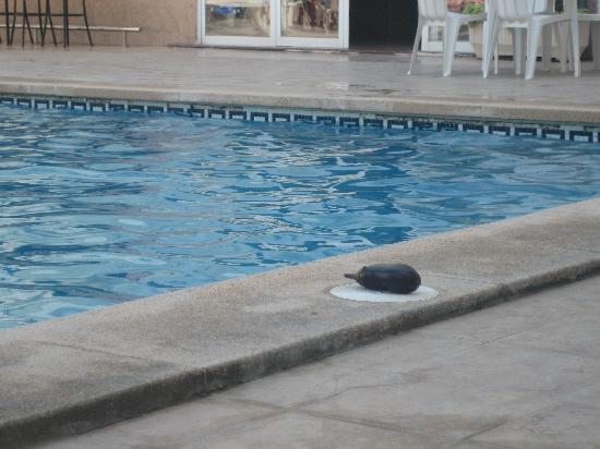 HSM Reina del Mar: La piscina