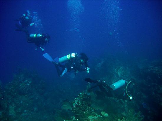 Bananarama Beach and Dive Resort: Divers