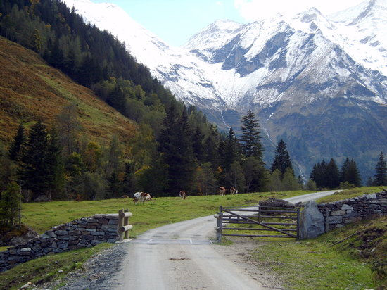 Zell am See, Österrike: Beim Wildpark Ferleiten