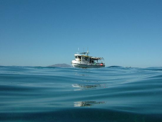 Baja Expeditions: Pez Sapo, the Mother Ship