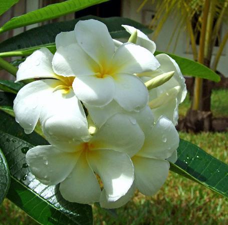 HAMI Diani Villas: Plants in the garden