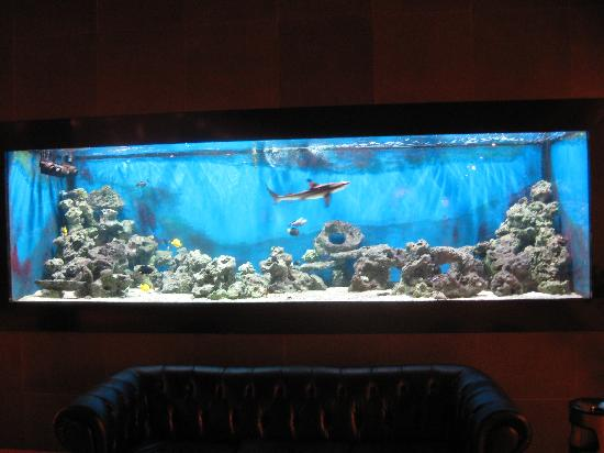 Private balcony picture of hotel roma prague prague for Fish hotel tank