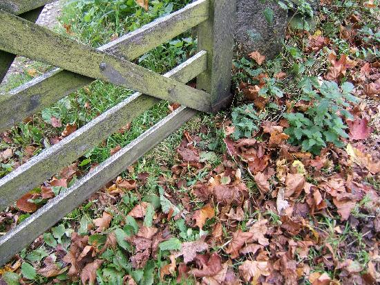 Badgers Wood Guest House: Autumn at Sawrey