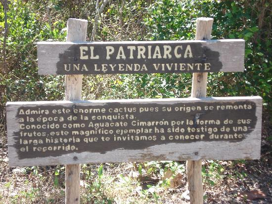 Cactus Patriarch: The Spanish sign I can't read