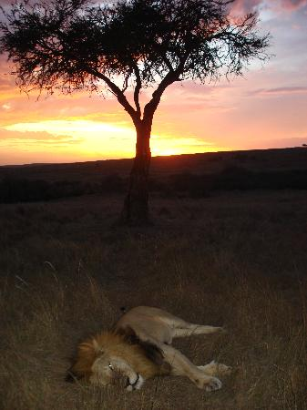 Rekero Camp, Asilia Africa: Sunset