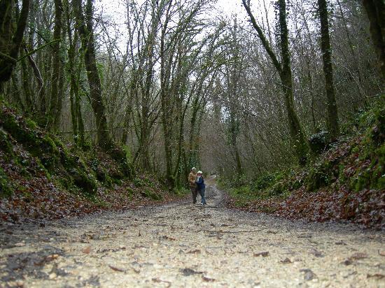 Chateau Puyferrat: bosques interminables