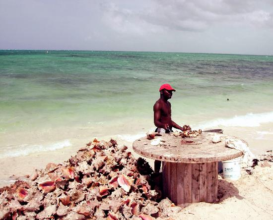 Sibonne Beach Hotel: You can be certain that the conch is fresh at