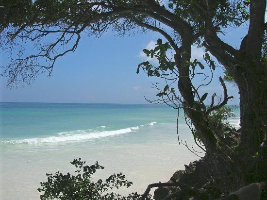 Baobab Beach Resort & Spa: View from Kole Kole beachfront