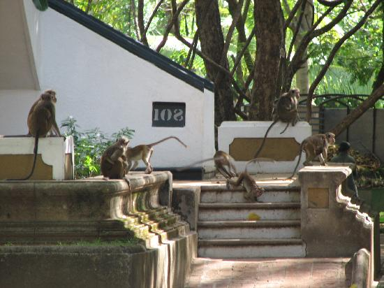 Habarana Village by Cinnamon: Monkey's outside the rooms!