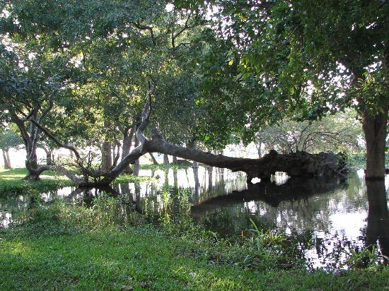 Habarana Village by Cinnamon: The lake