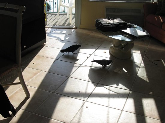 Fountain Beach Resort: birds that came into our room