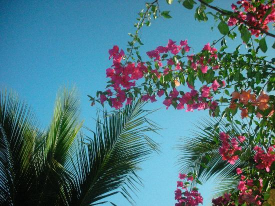 Comfort Inn Los Cabos: palm trees and flowers