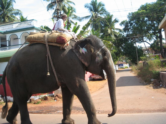 Candolim, Indien: safe transport