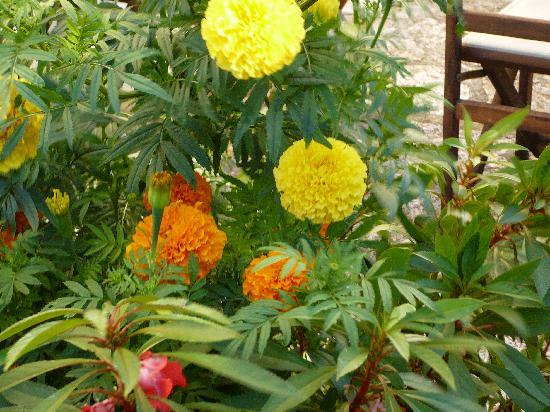 Dafnoudi Hotel: Flowers on the property.