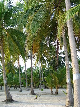Bohol Beach Club: Lungo spiaggia