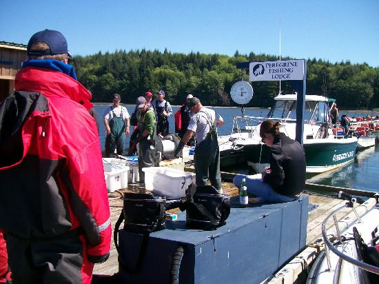 Peregrine Lodge: Tagging and weighing the day's catch