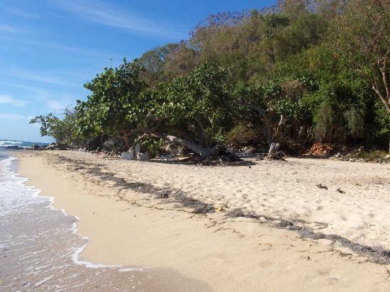 Hotel Brisas Los Galeones: beach