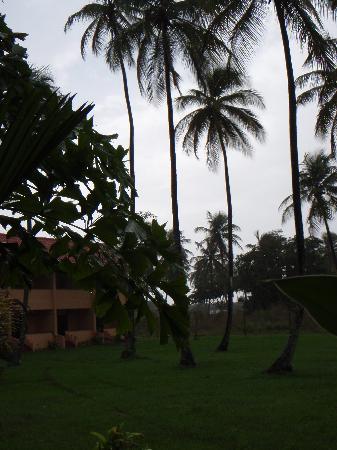 Coconut Inn: My Fav pic