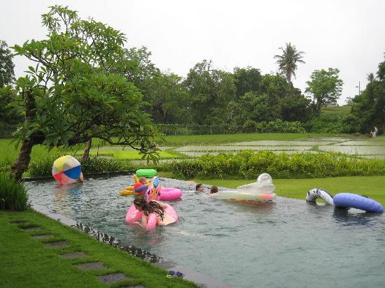 Sitara Padi Villas: Pool in the ricefields
