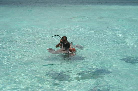 Bora Bora, French Polynesia: Sting Ray:s gathering