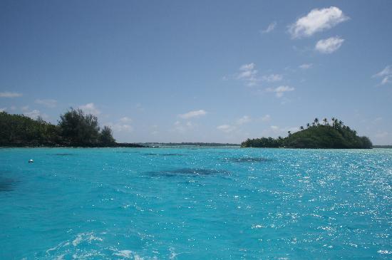 Bora Bora, Polinesia Francesa: Coral Garden