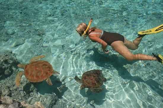 Bora Bora, French Polynesia: Swimming with turtles at the hotel lagoon