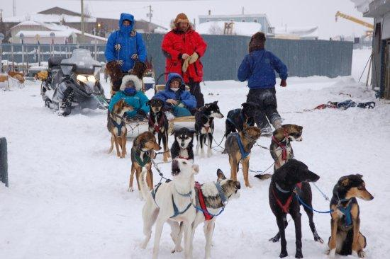 Yellowknife, Kanada: Beck's Kennels