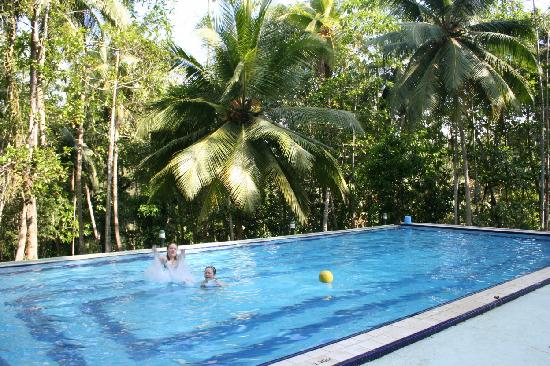 Hotel Tulip of Ceylon: The Pool at the edge of the Jungle