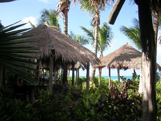Galley Bay Resort : The wonderful Gauguin