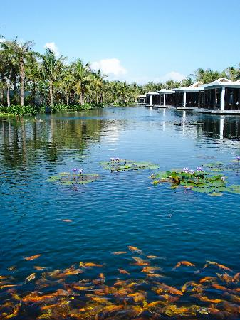 Four Seasons Resort The Nam Hai, Hoi An : The pond at the Nam Hai Spa