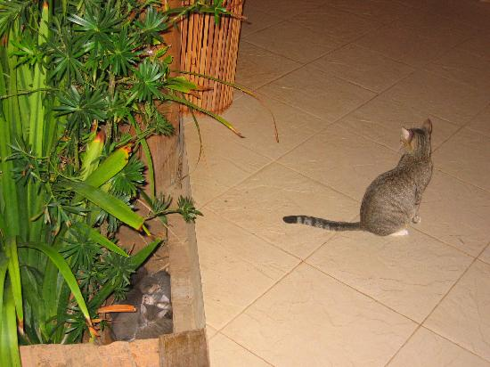 Hotel Via dos Corais: The mother cat and her kittens