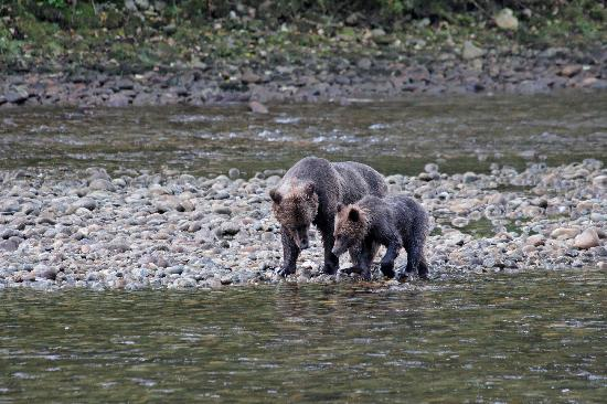 Great Bear Lodge: Mother and cub with salmon