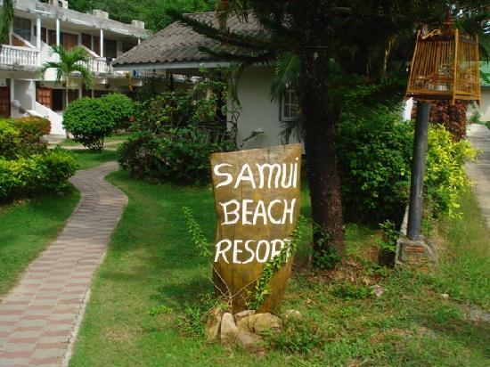 Samui Beach Resort: The landscape