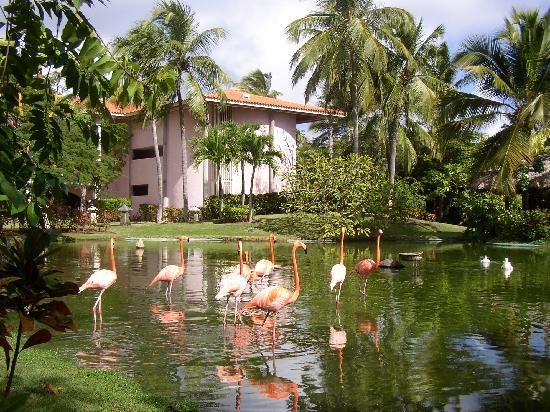 Tripadvisor Reviews Nature Park Eco Resort And Spa Punta Cana