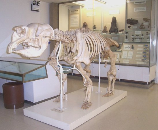 University Museum of Zoology : Megafauna - Giant Marsupial from Australia